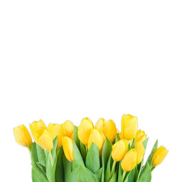 Flores, Plantas y Árboles